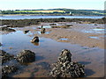 NS4173 : Dumbuck Crannog - remains of timber piles (south-east) by Lairich Rig