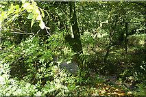 SX0882 : Camelford: river near Lanteglos by Martin Bodman