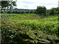 SE2406 : View over the Maize field towards Cathill by Wendy North