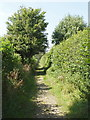 SU7890 : Bridleway from Little Frieth to Skirmett by David Hawgood