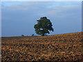 SU8371 : Farmland, Billingbear by Andrew Smith