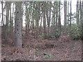 SJ4654 : Woodland, Parker's Hill by Richard Webb