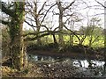 SJ4552 : Pond, Lower Carden by Richard Webb