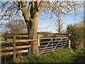 SJ4751 : Stock pen and conker tree by Richard Webb