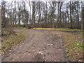 SU7795 : Clearing in East Wood by Shaun Ferguson