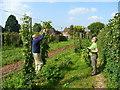 SO5840 : Harvesting hops by hand by Jonathan Billinger