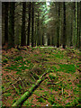 NO8086 : Fetteresso Forest : Week 38