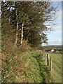SS8385 : Public footpath at the southern edge of Coed Tonmawr by eswales