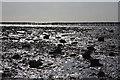 TM0614 : Sunlit beach, East Mersea by Bob Jones