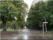 N9734 : Avenue at Castletown House, Celbridge by Ian Paterson