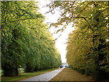 N9733 : Avenue in Autumn by Ian Paterson