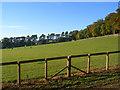 SU7685 : Paddock, Fawley by Andrew Smith