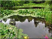 NJ5429 : The pond at Leith Hall by Alan Findlay