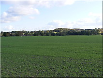 TM3876 : Farmland next to the B1117 Walpole Road by Adrian Cable