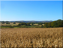 TQ1814 : Low Weald near Upper Northover Farm by Simon Carey