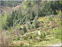 NS1385 : Patagonian forest, Benmore Gardens by Richard Webb
