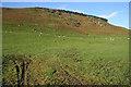 NY3189 : Grazing sheep below Boyken Craigs by Walter Baxter