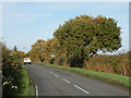 TL3360 : Tree-lined road to Knapwell by Keith Edkins