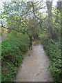 TQ2113 : Stream, Woods Mill Nature Reserve by Simon Carey