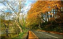 J4846 : The Old Belfast Road, Downpatrick (2) by Albert Bridge