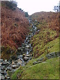 NY3404 : Beck, Loughrigg Fell by Michael Graham
