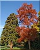 SX9193 : Trees, Exeter University by Derek Harper
