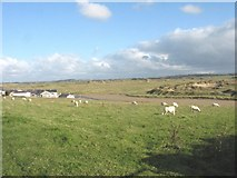 SH3568 : Grazing sheep above the estuary of Afon Ffraw by Eric Jones
