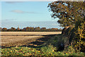 TA0044 : Wheatfield north of Leconfield by Peter Church