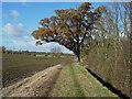 TL3961 : Bridleway past Little Shrubs by Hugh Venables