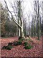 TG3130 : Woodland path through Witton Heath by Evelyn Simak