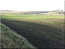 NT1874 : Field between Maybury Road [A902] and Cammo Walk by M J Richardson