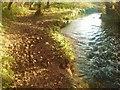 SM8722 : Leafy path along Brandy Brook by Deborah Tilley