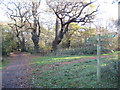 TQ1760 : Ashtead Common: Woodcock Corner by Nigel Cox