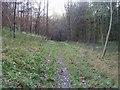 SU7693 : Footpath through Twigside Bottom by Shaun Ferguson
