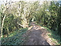 TQ0201 : Footpath between Rope Walk and The Mill by Basher Eyre