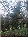 SN0615 : Weird tree! by Deborah Tilley