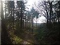 SN0614 : Path to the Eastern Cleddau by Deborah Tilley