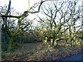 NY5015 : Oakwood in winter by Oliver Dixon