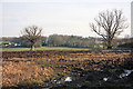 TL6153 : View towards Weston Colville by Bob Jones