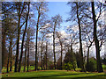SU7483 : Trees on the golf course, Badgemore by Andrew Smith