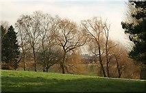 ST0107 : Trees near the Tiverton Road, Cullompton by Derek Harper