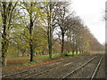 NY9265 : The Newcastle to Carlisle railway line near The Spital by Mike Quinn
