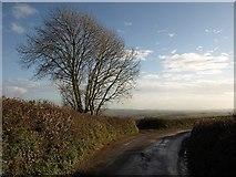 SX7667 : Tree by the lane to Landscove by Derek Harper