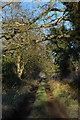 SO8043 : Green lane to Lower Arles Wood by Philip Halling
