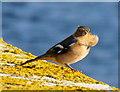 NG3863 : Ruffled feathers at King Edward Pier, Uig by Dannie Calder