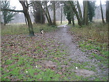 SU9948 : A murky December morning in Shalford Park by Basher Eyre