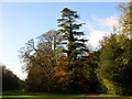 SP0002 : Cirencester Park by Alby