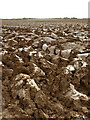 TA1832 : Ploughed field south of Wyton by Andy Beecroft