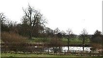 SE3953 : Lake in Ribston Park by Gordon Hatton