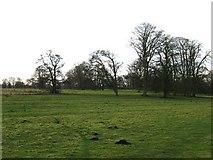 SE3953 : Ribston Park by Gordon Hatton